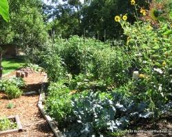 Veggie garden doing well