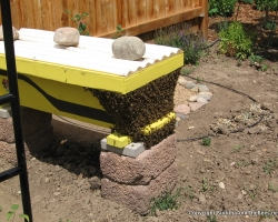 Bees after the harvest
