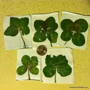 A 4-leaf clover for each treatment
