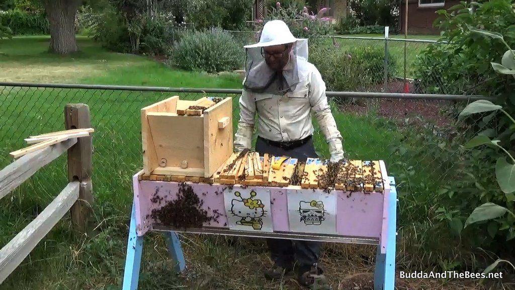 Unhappy bees, Unhappy Don